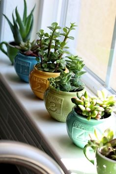 Awesome Dorm Room Plants Part 6